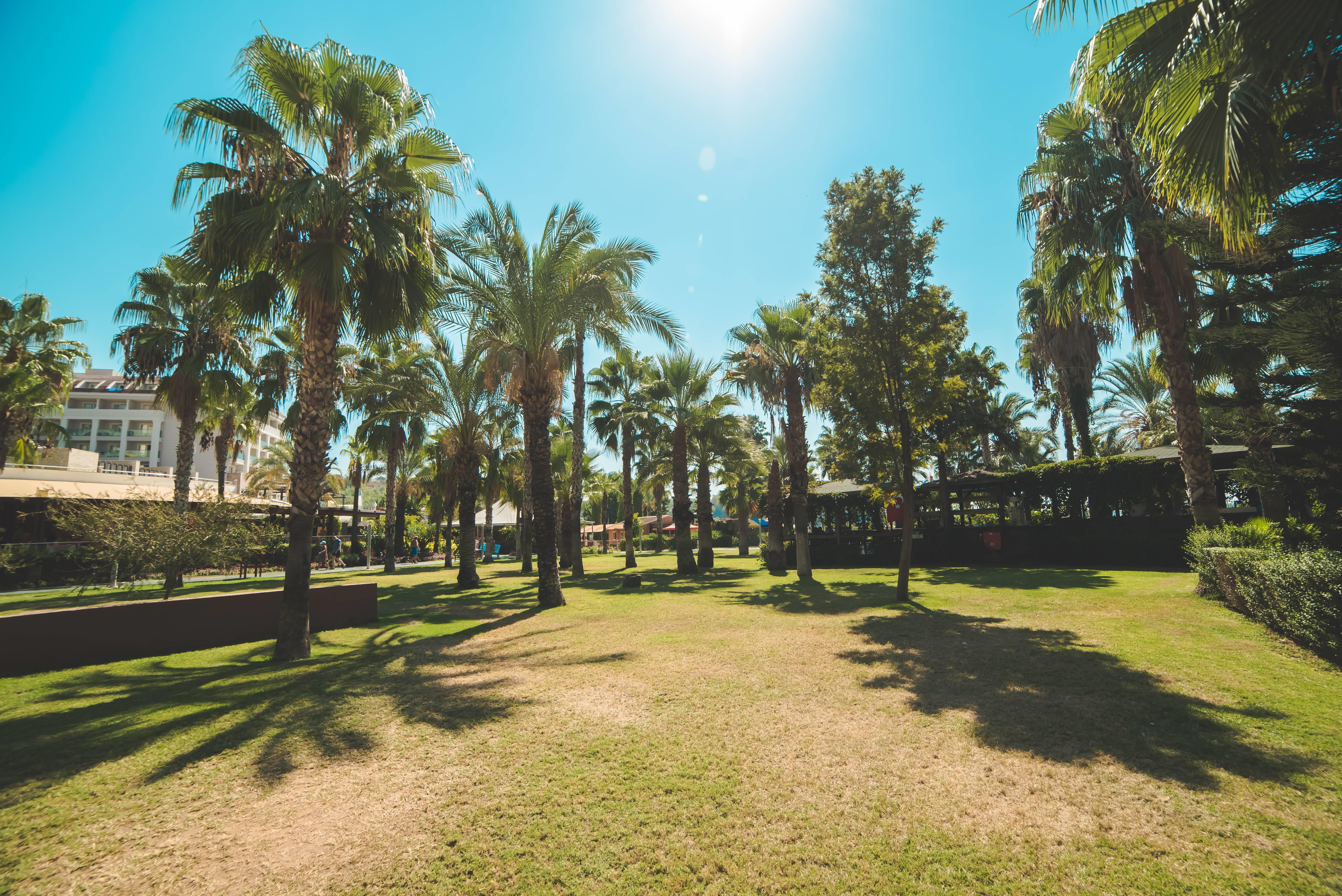 Arycanda De Luxe 5˙ - záhrada