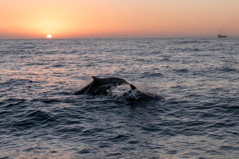 Pozorovanie delfínov